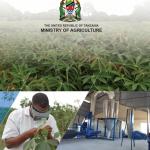 IITA supports production of Tanzania's national cassava development strategy